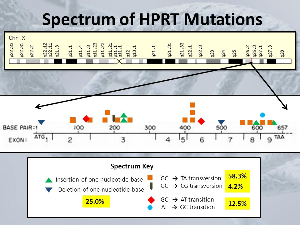 Spectrum of HPRT Mutations