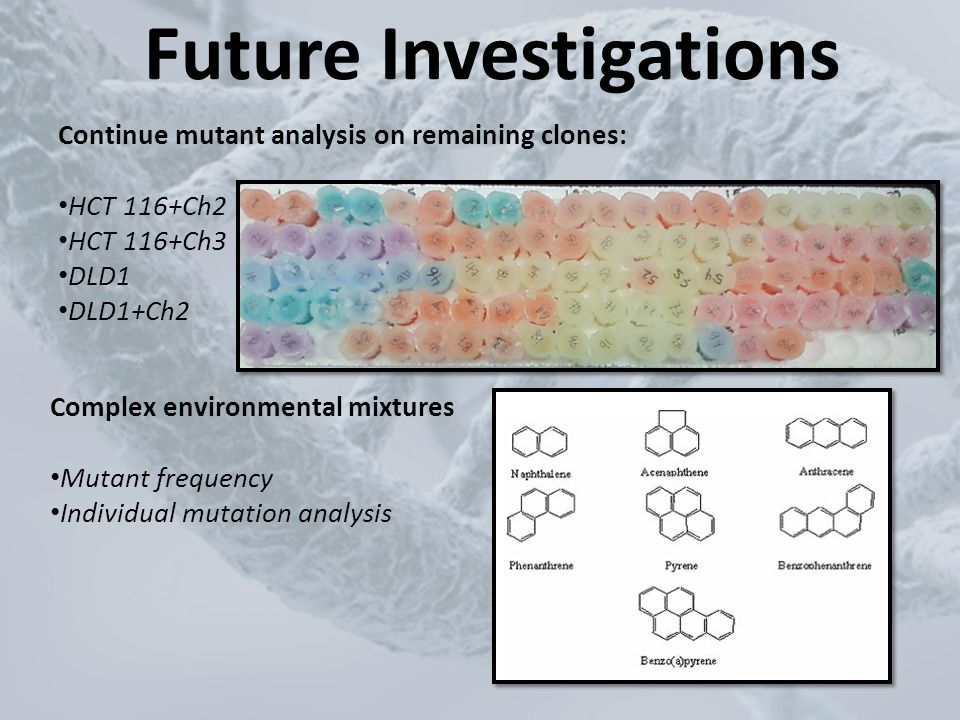 Future Investigations