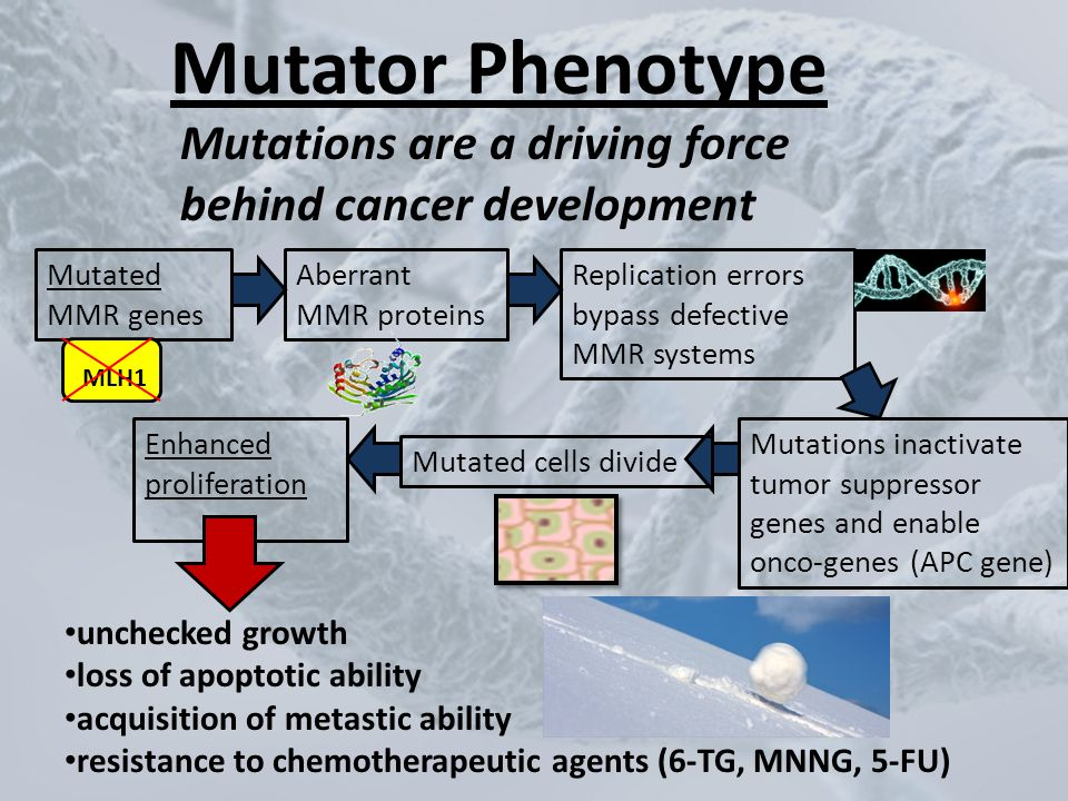 Mutator Phenotype Mutations are a driving force behind cancer development. Mutated MMR genes. MLH1.