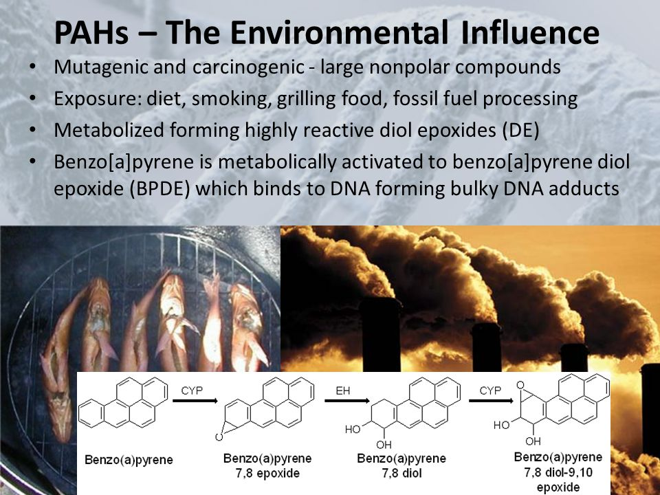 PAHs – The Environmental Influence