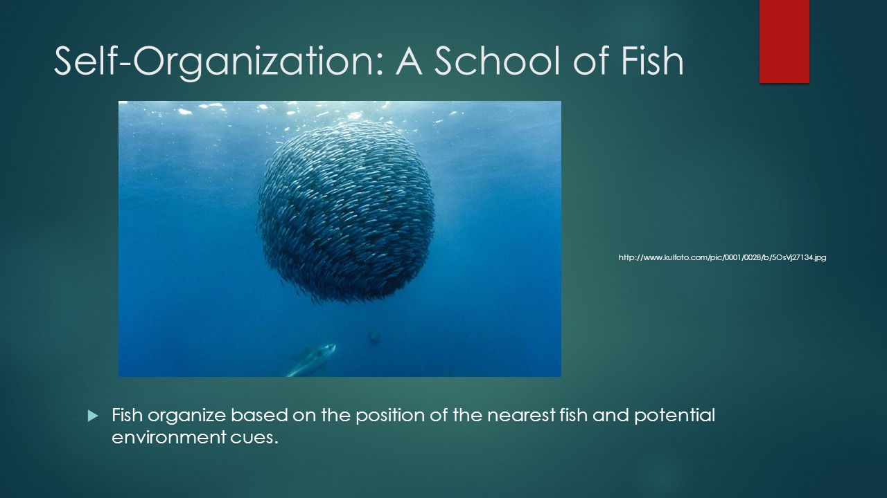 Self-Organization: A School of Fish