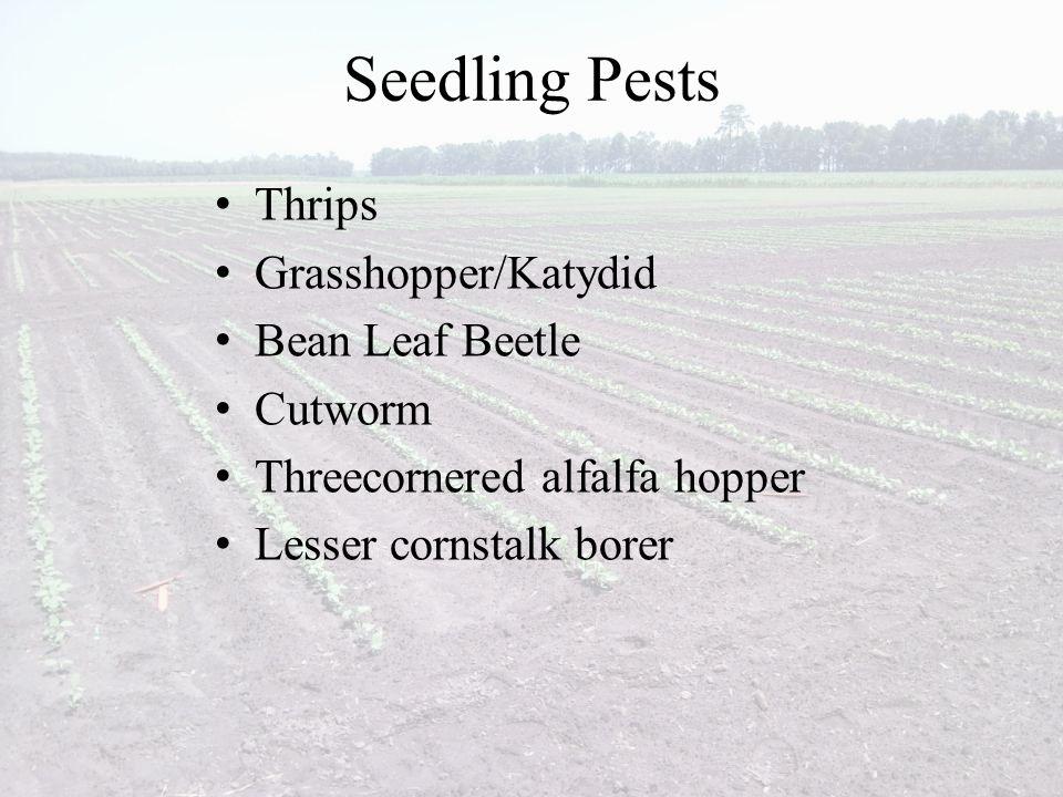 Seedling Pests Thrips Grasshopper/Katydid Bean Leaf Beetle Cutworm