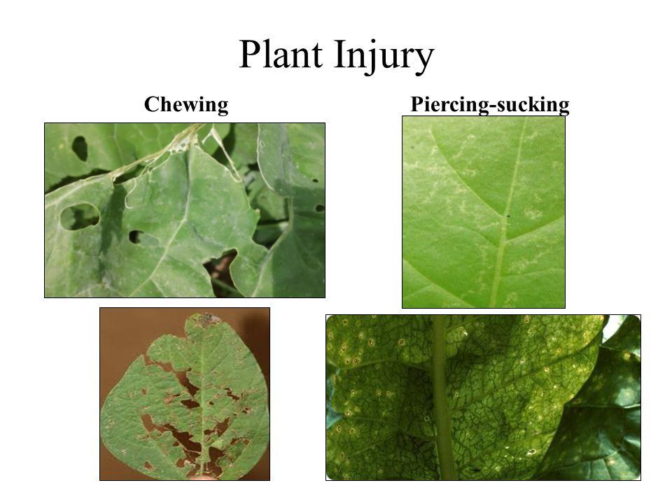 Plant Injury Chewing Piercing-sucking