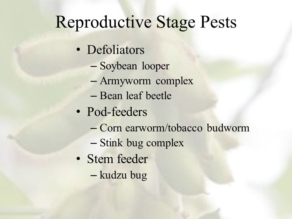 Reproductive Stage Pests