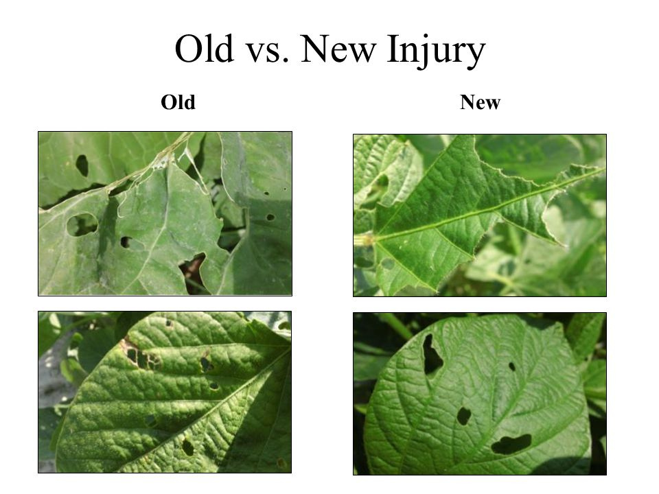 Old vs. New Injury Old New