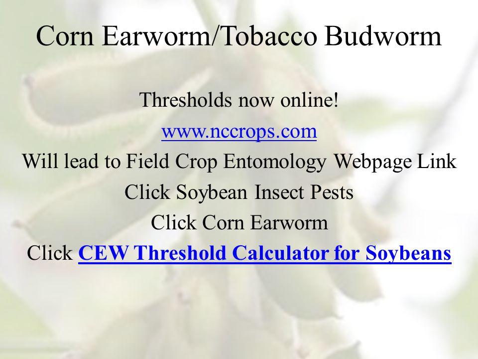 Corn Earworm/Tobacco Budworm