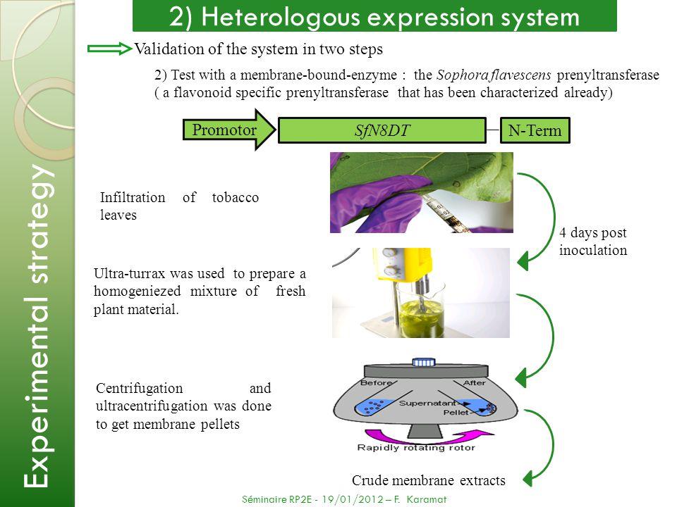 2) Heterologous expression system