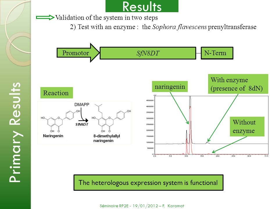 The heterologous expression system is functional