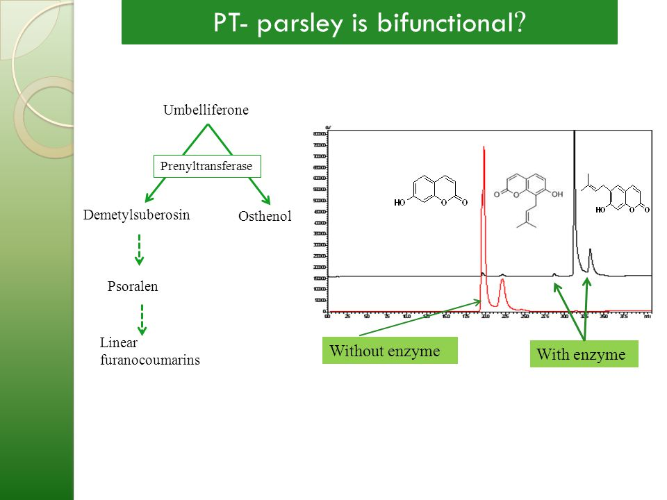 PT- parsley is bifunctional