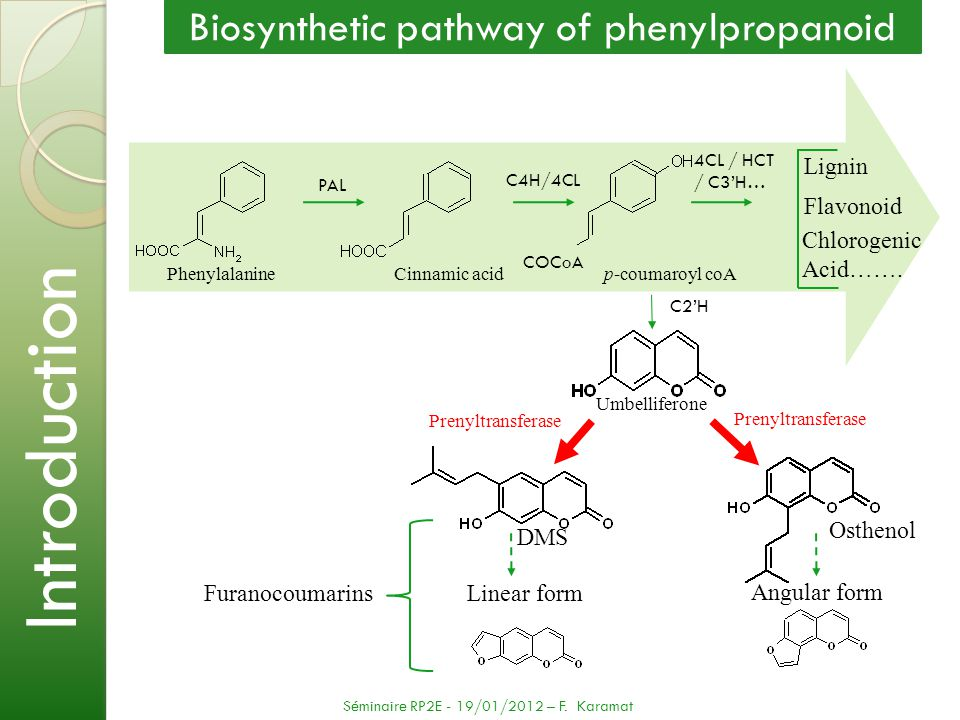 Biosynthetic pathway of phenylpropanoid