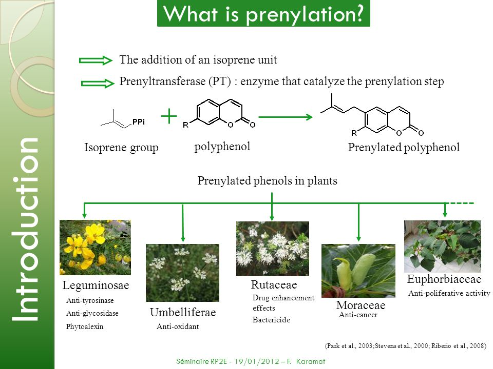 Introduction What is prenylation The addition of an isoprene unit