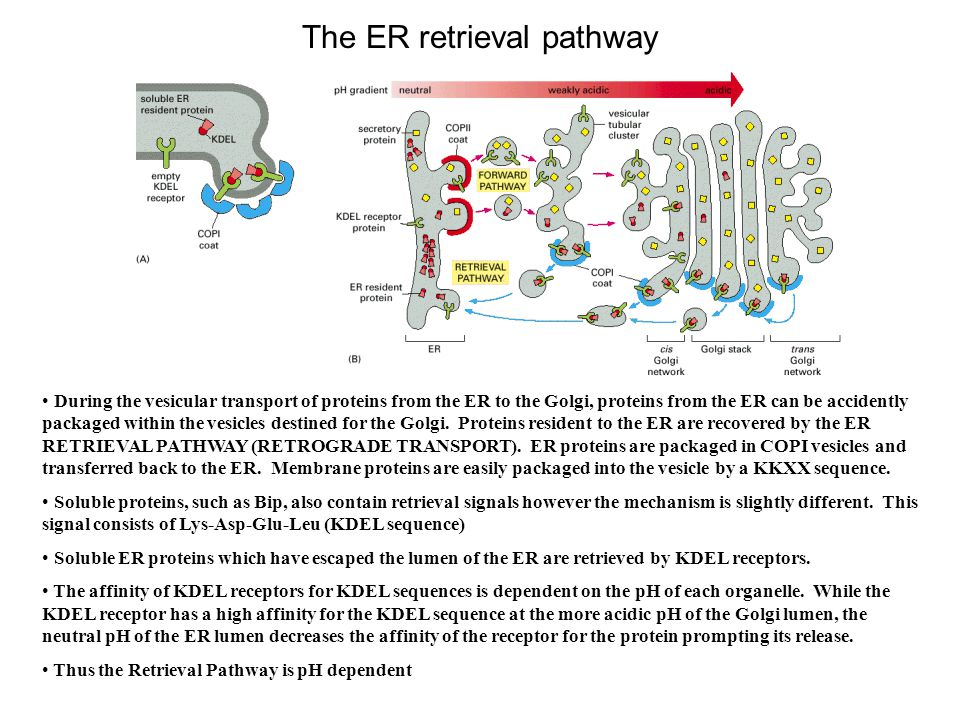 The ER retrieval pathway