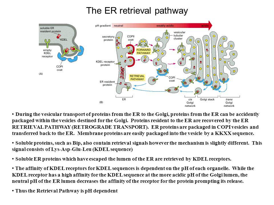 The ER retrieval pathway