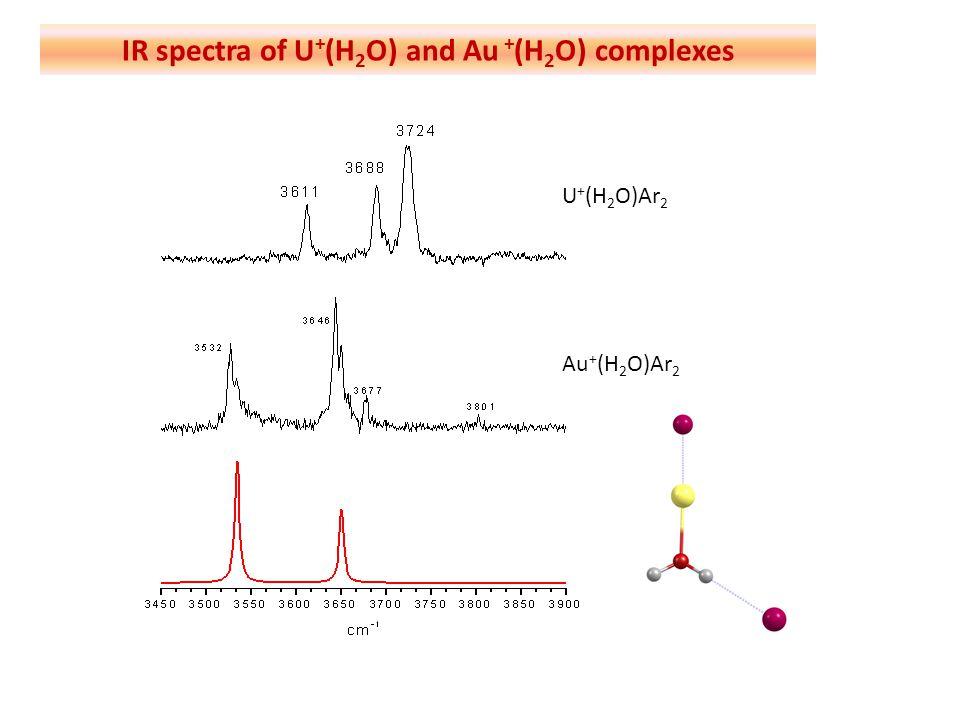 IR spectra of U+(H2O) and Au +(H2O) complexes