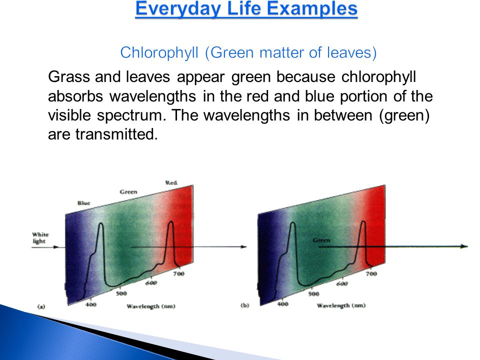 Everyday Life Examples Chlorophyll (Green matter of leaves)