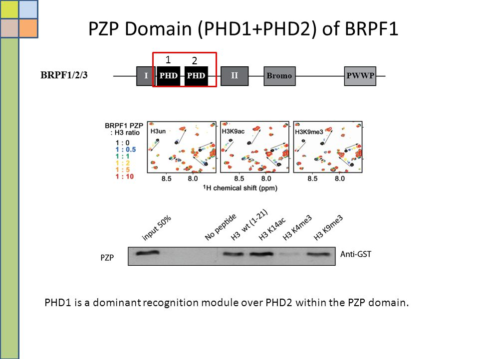 PZP Domain (PHD1+PHD2) of BRPF1