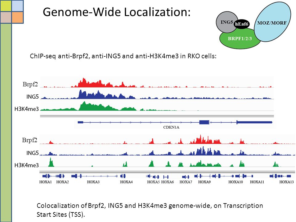 Genome-Wide Localization: