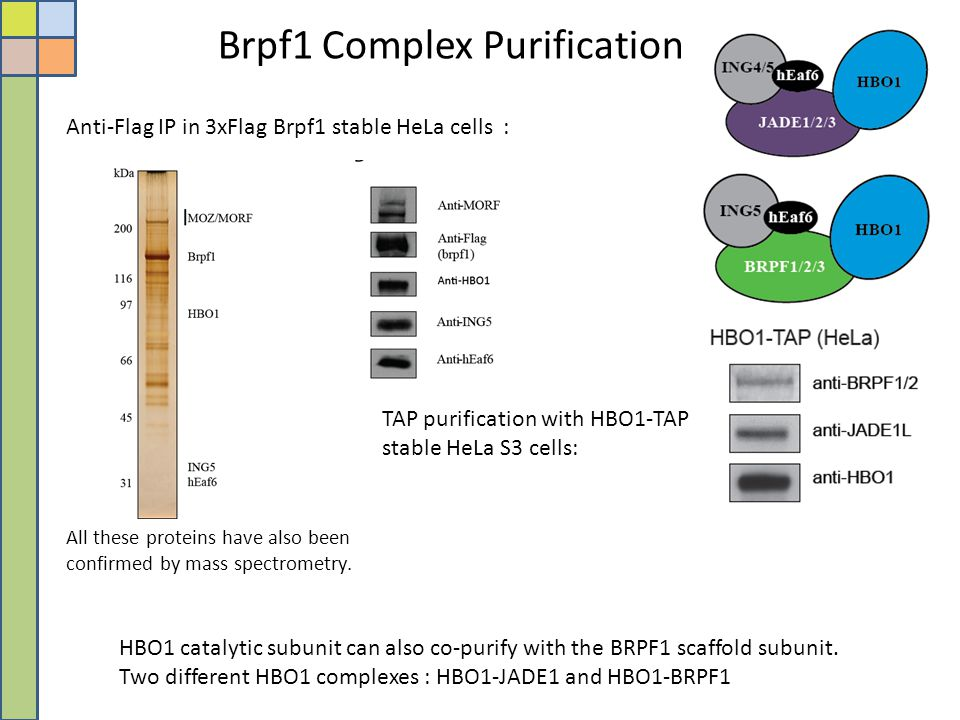 Brpf1 Complex Purification