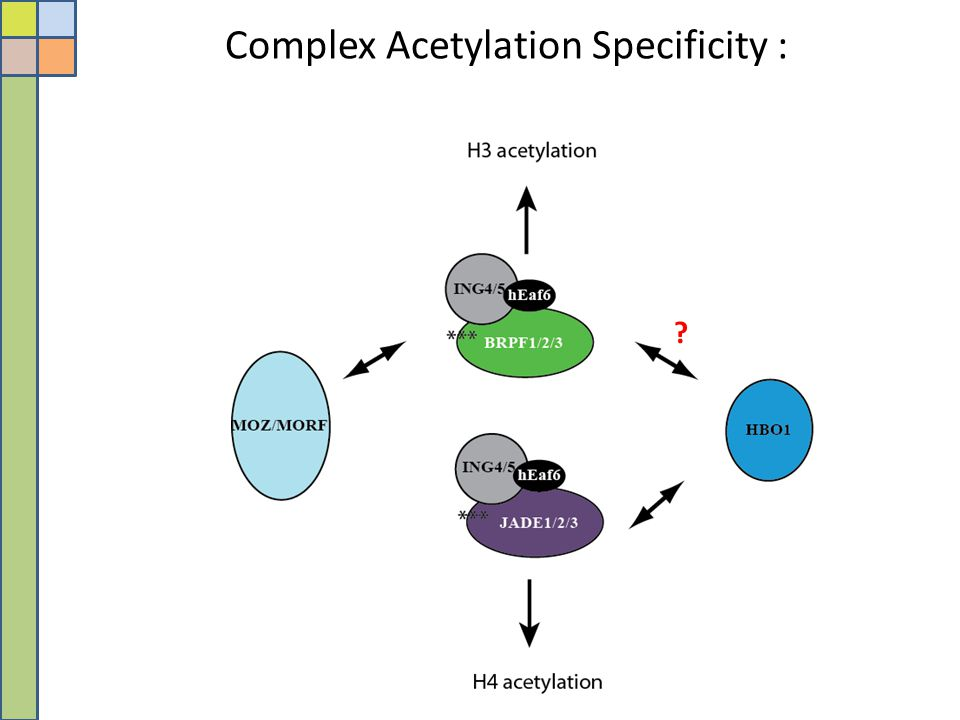 Complex Acetylation Specificity :