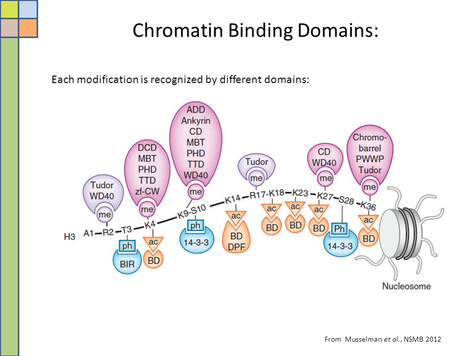 Chromatin Binding Domains: