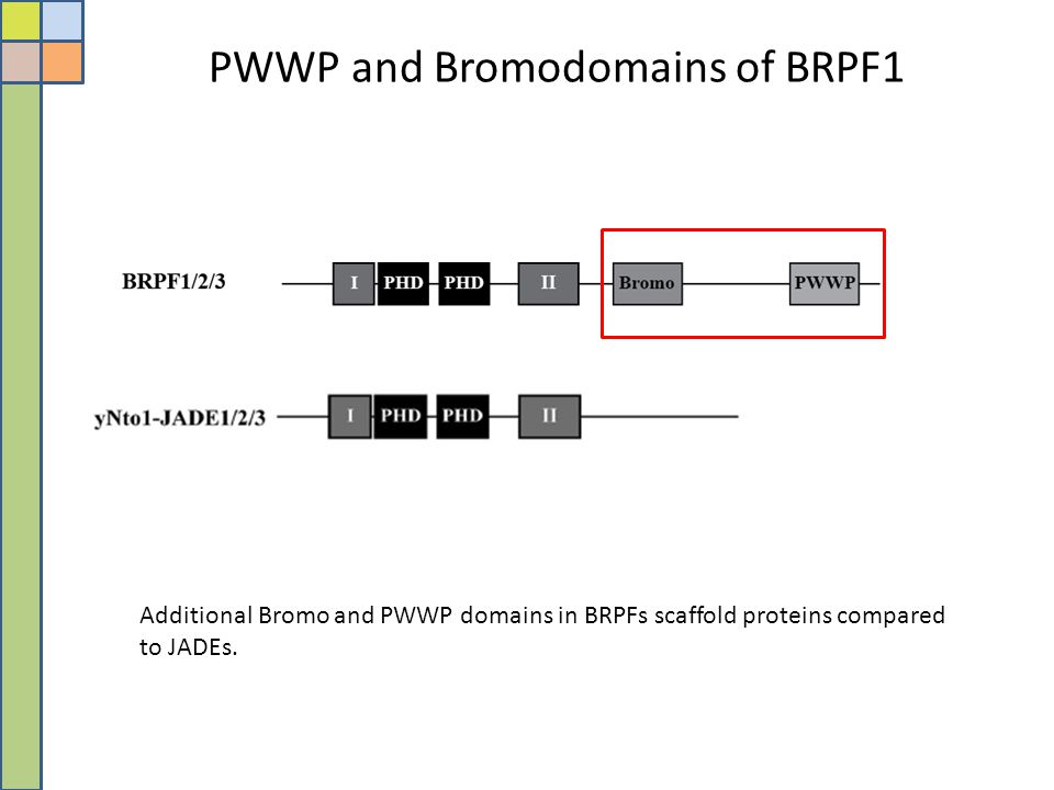 PWWP and Bromodomains of BRPF1