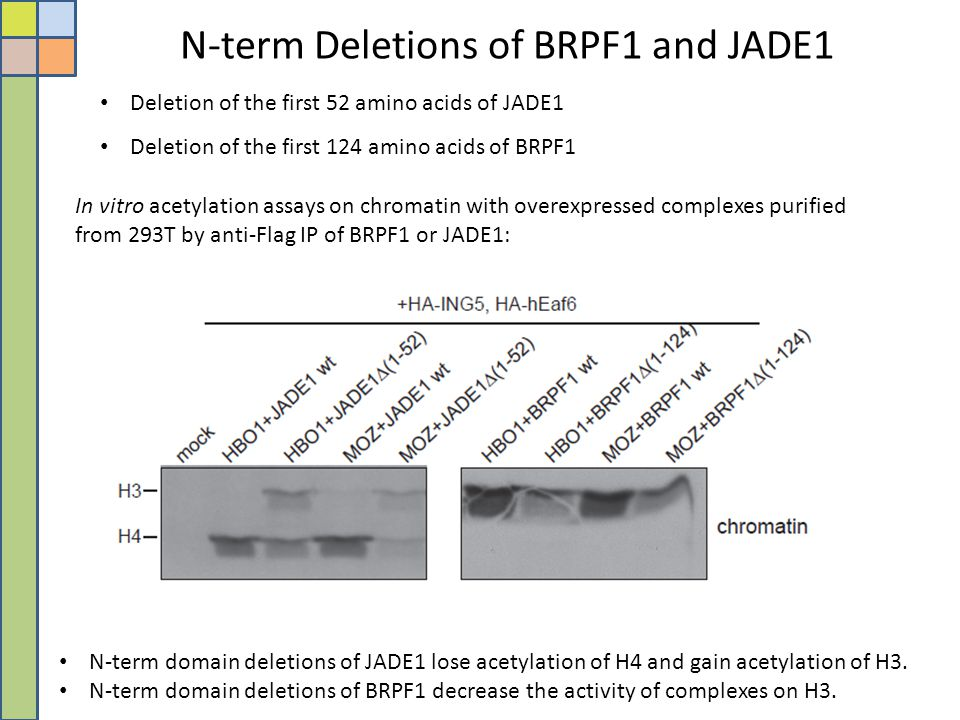 N-term Deletions of BRPF1 and JADE1
