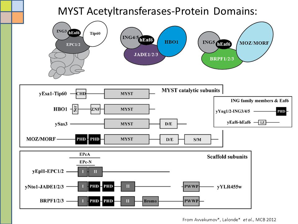 MYST Acetyltransferases-Protein Domains: