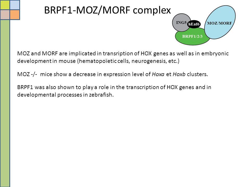 BRPF1-MOZ/MORF complex