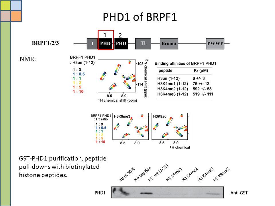 PHD1 of BRPF1 1. 2.