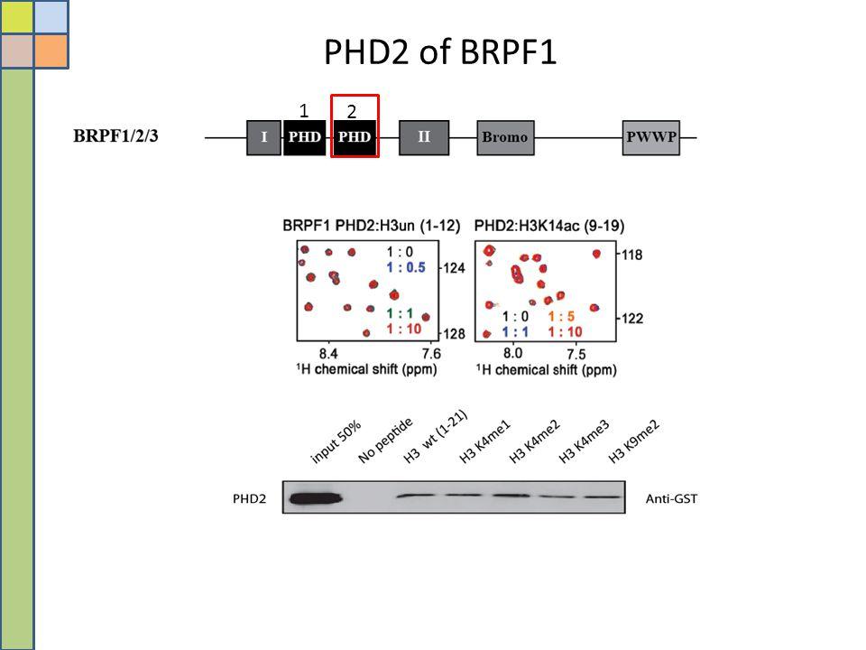 PHD2 of BRPF1 1 2