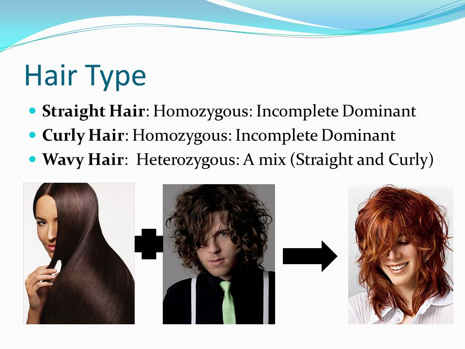 Hair Type Straight Hair: Homozygous: Incomplete Dominant