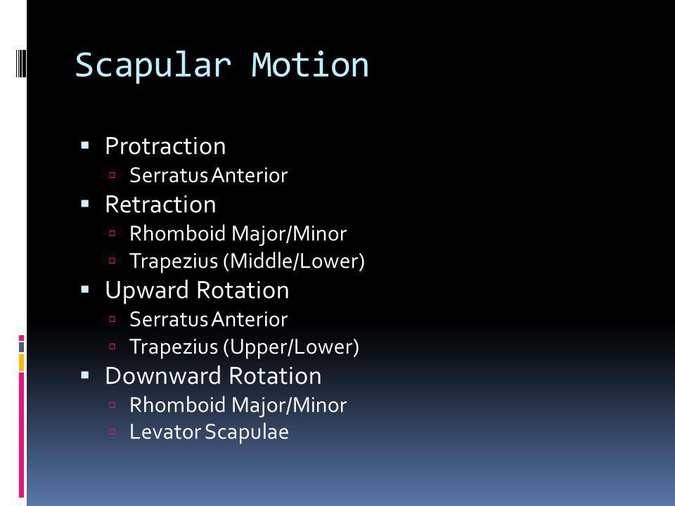 Scapular Motion Protraction Retraction Upward Rotation