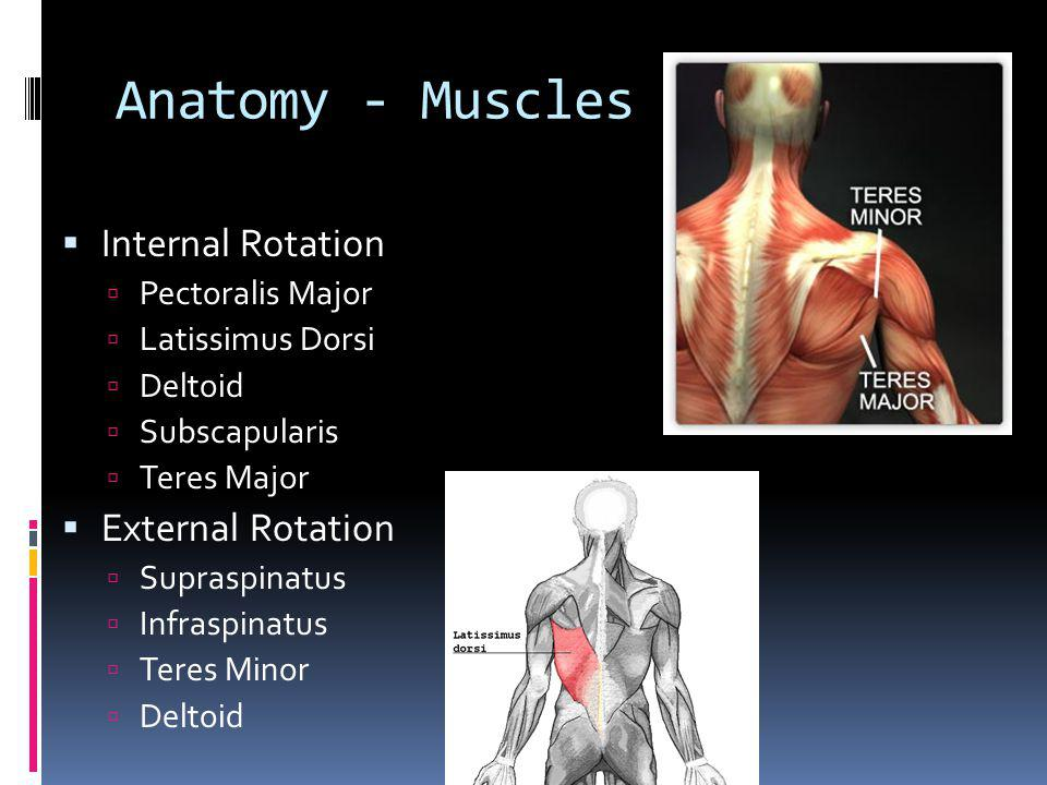 Anatomy - Muscles Internal Rotation External Rotation Pectoralis Major