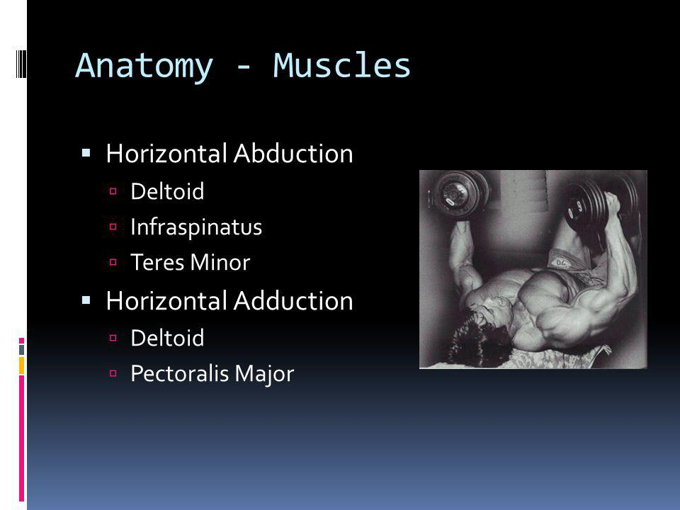 Anatomy - Muscles Horizontal Abduction Horizontal Adduction Deltoid