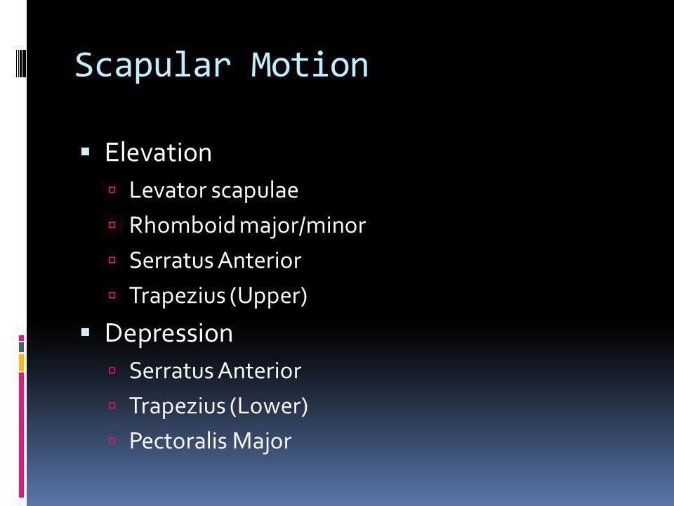 Scapular Motion Elevation Depression Levator scapulae
