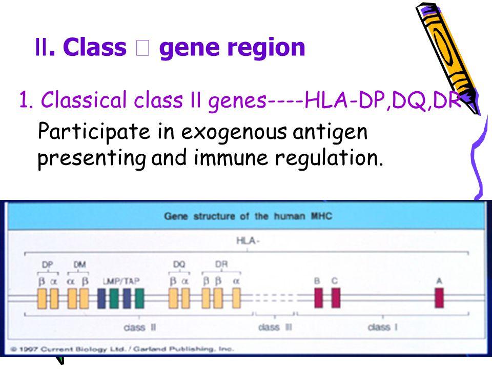 Ⅱ. Class Ⅱ gene region 1. Classical class Ⅱ genes----HLA-DP,DQ,DR