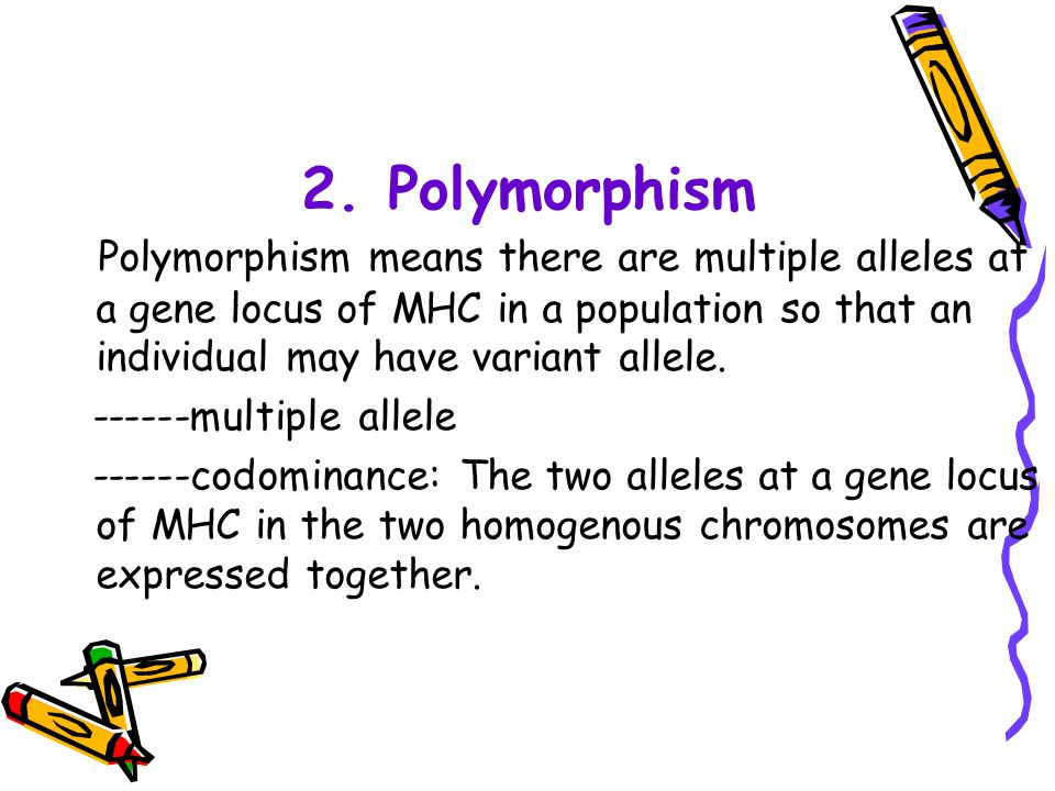 2. Polymorphism Polymorphism means there are multiple alleles at a gene locus of MHC in a population so that an individual may have variant allele.