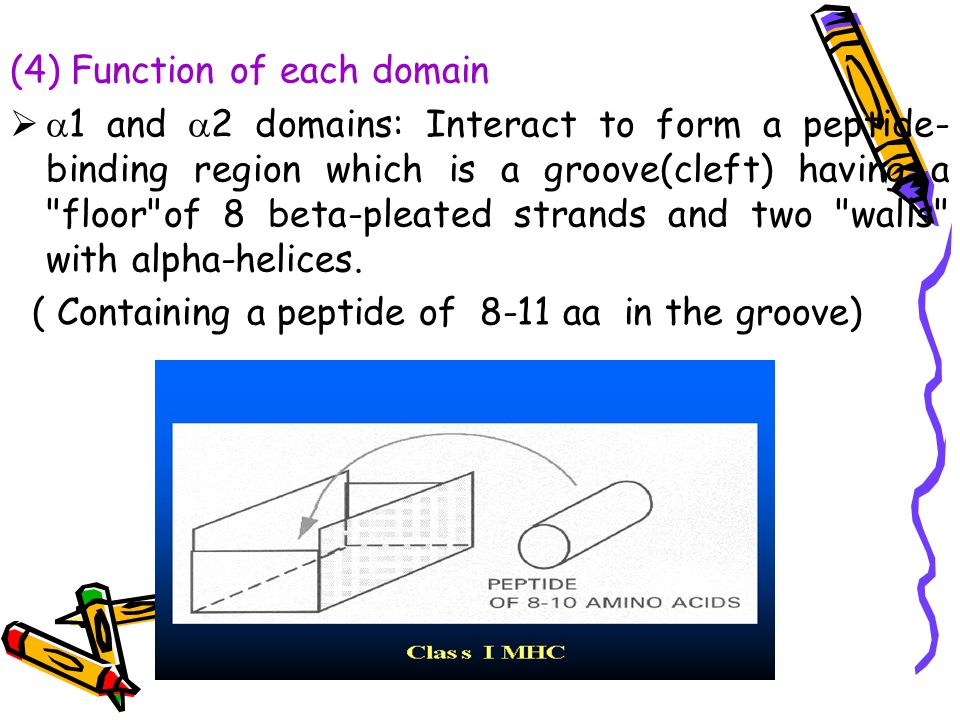 (4) Function of each domain
