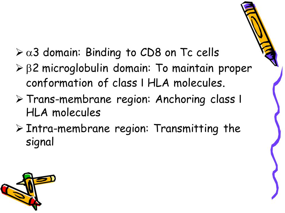 3 domain: Binding to CD8 on Tc cells