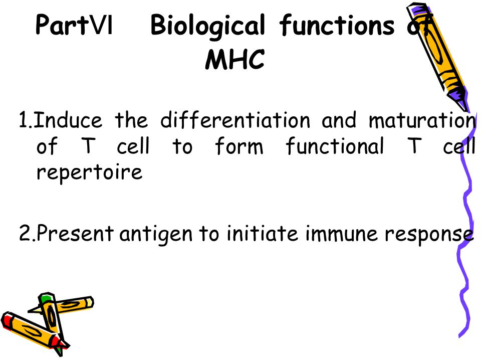 PartⅥ Biological functions of MHC