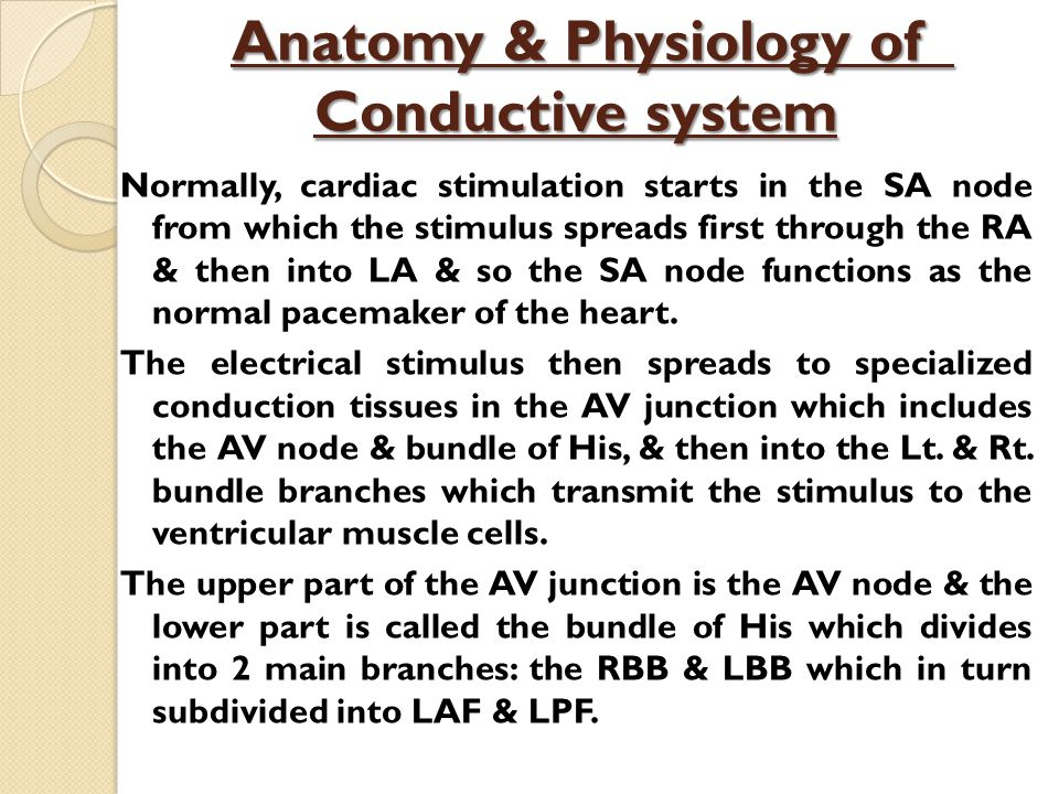 Anatomy & Physiology of Conductive system