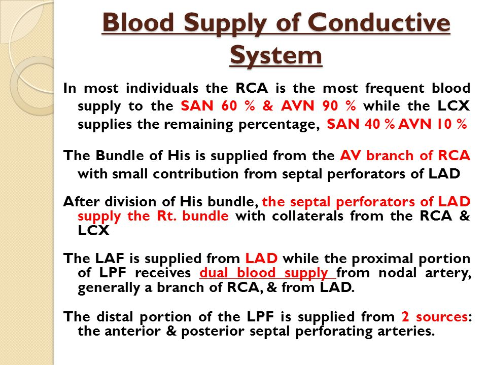 Blood Supply of Conductive System
