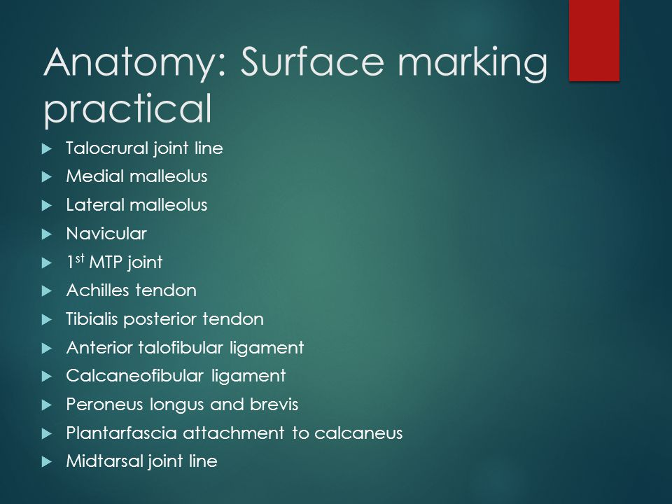 Anatomy: Surface marking practical