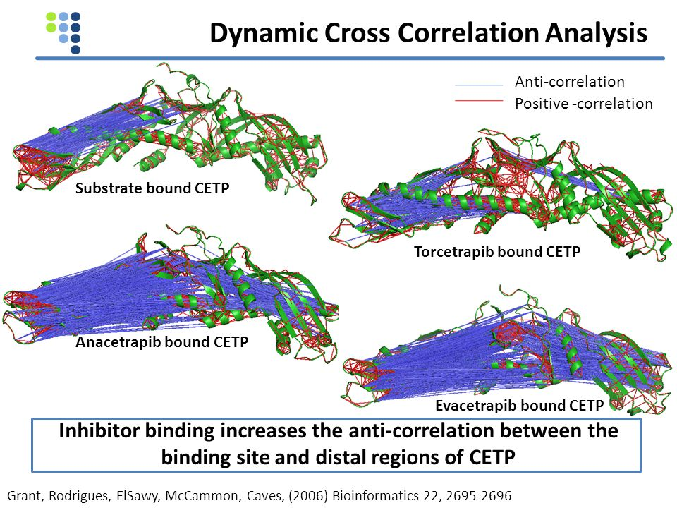Dynamic Cross Correlation Analysis