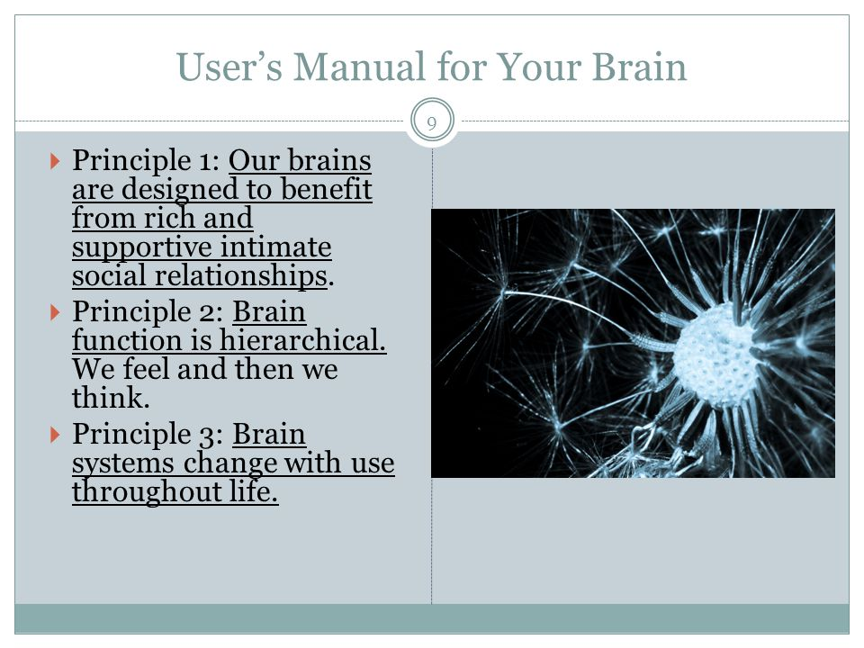 User's Manual for Your Brain