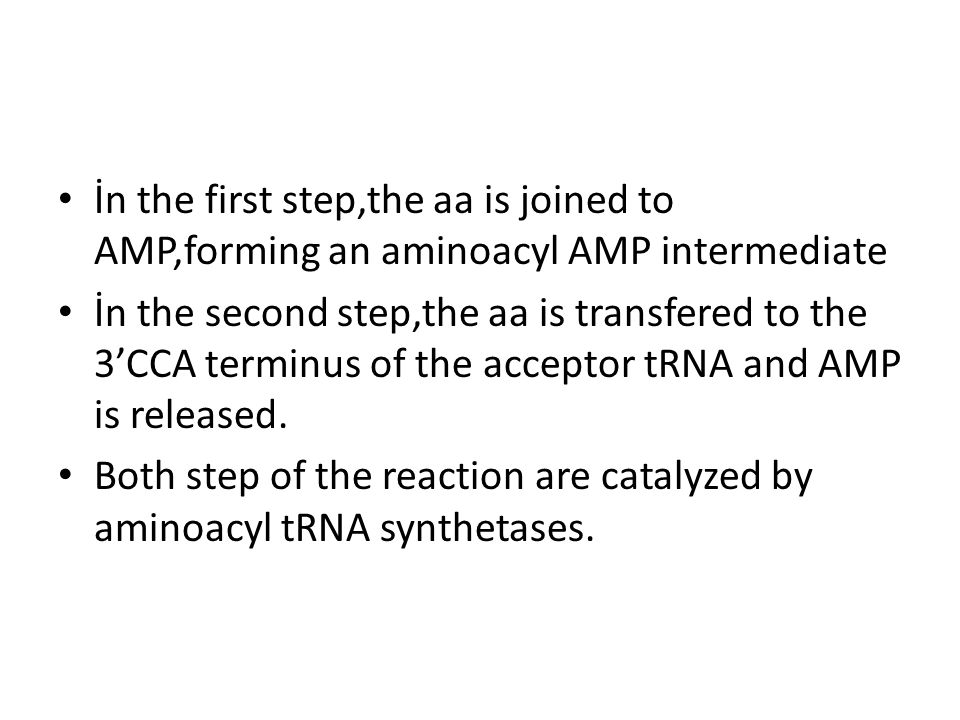 İn the first step,the aa is joined to AMP,forming an aminoacyl AMP intermediate