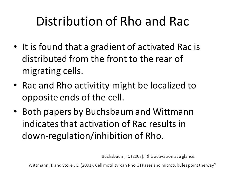 Distribution of Rho and Rac