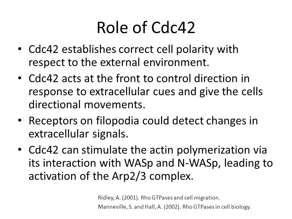 Role of Cdc42 Cdc42 establishes correct cell polarity with respect to the external environment.