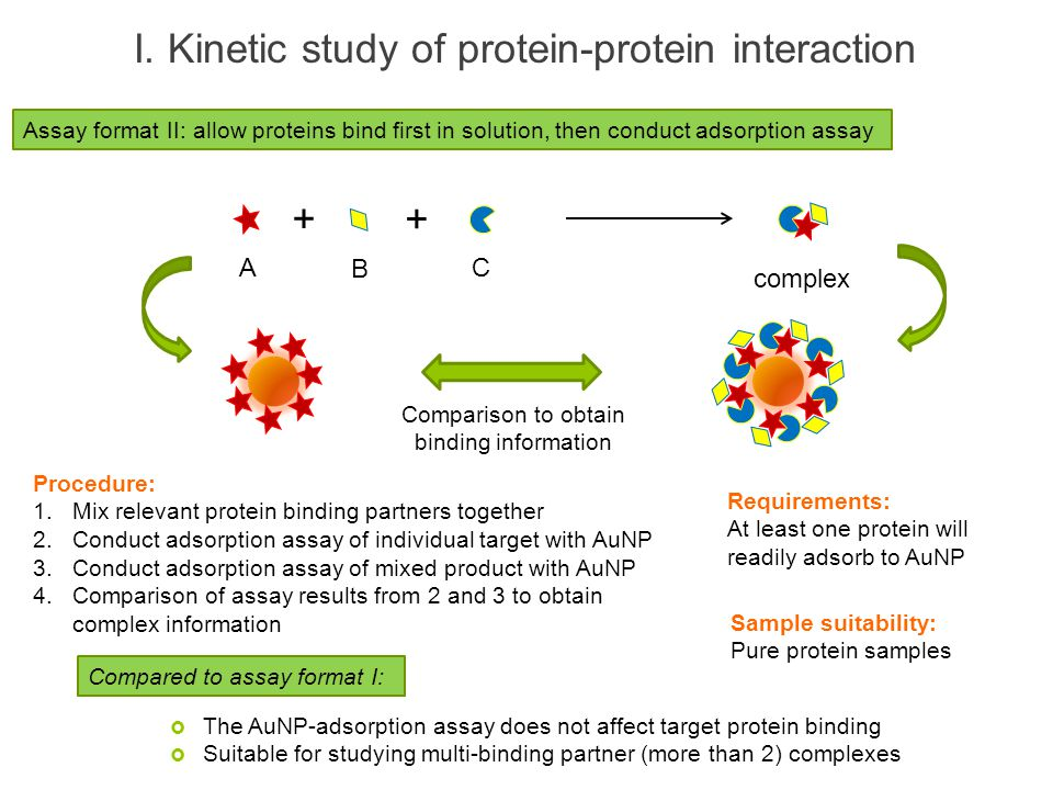 I. Kinetic study of protein-protein interaction