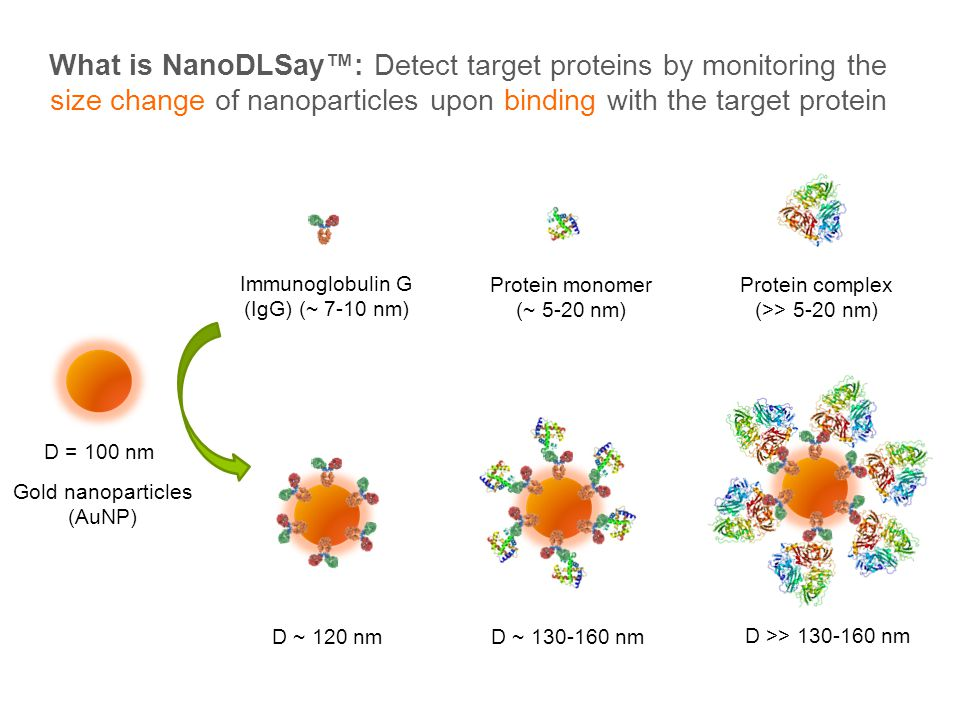 What is NanoDLSay™: Detect target proteins by monitoring the size change of nanoparticles upon binding with the target protein